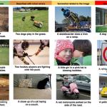 Google robot dokáže rozoznať, čo vidí na obrázku